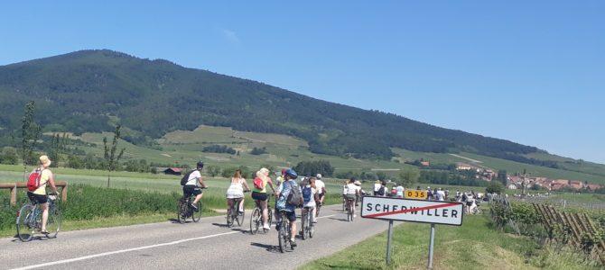5 balades à vélo organisées à ne pas manquer en Alsace